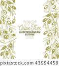 Olive tree banner template. Vector vintage illustration. Hand drawn engraved style background 43994459