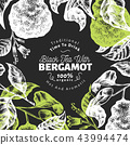 Bergamot branch design template. Kaffir lime frame. Hand drawn vector fruit illustration on chalk 43994474