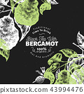 Bergamot branch design template. Kaffir lime frame. Hand drawn vector fruit illustration on chalk 43994476