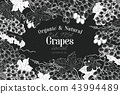Grape berry frame template. Hand drawn vector fruit illustration on chalk board. Engraved style 43994489