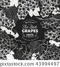 Grape berry frame template. Hand drawn vector fruit illustration on chalk board. Engraved style 43994497