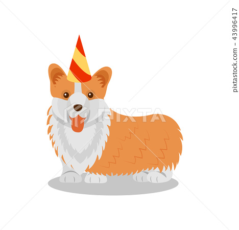 Welsh corgi pedigree dog in party hat, cute puppy pet character vector Illustration on a white 43996417