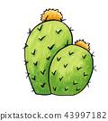 Mexican Edible Cactus or Cacti for Cinco De Mayo 43997182