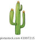 Mexican Edible Cactus or Cacti for Cinco De Mayo 43997215