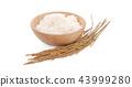 Paddy rice isolated on white background 43999280