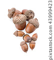 acorns on a white background ,close up 43999423