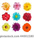 Big Selection of Various Flowers Isolated on White 44001580