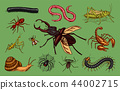 Big set of insects. Vintage Pets in house. Bugs Beetles Scorpion Snail, Whip Spider, Worm Centipede 44002715