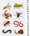 Big set of insects. Vintage Pets in house. Bugs Beetles Scorpion Snail, Whip Spider, Worm Centipede 44002734