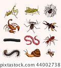Big set of insects. Vintage Pets in house. Bugs Beetles Scorpion Snail, Whip Spider, Worm Centipede 44002738