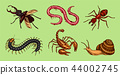 Big set of insects. Vintage Pets in house. Bugs Beetles Scorpion Snail, Whip Spider, Worm Ant 44002745