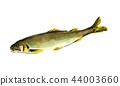 香魚香魚 44003660