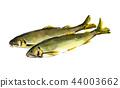 香魚香魚 44003662