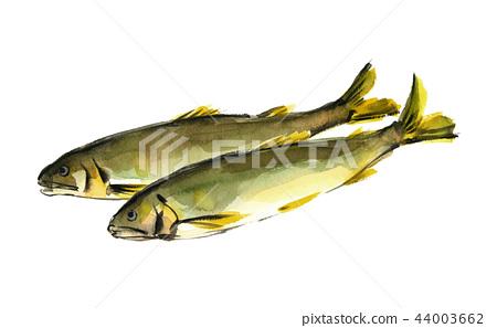 Sweetfish 44003662