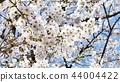 日本风景 44004422