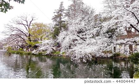 日本風景 44004447