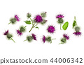 Burdock flower isolated on white background with copy space for your text. Medicinal plant: Arctium 44006342