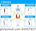 Quadriceps 2 44007837