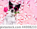 dog love rose valentines 44008233