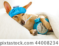 dog  sick or ill  in bed 44008234
