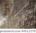 tomakomai, forest, winter 44012176
