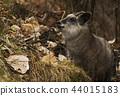 สัตว์ป่า,สัตว์,ภาพวาดมือ สัตว์ 44015183