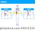 腸腰筋 2 44015334