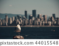 Seagull and Vancouver 44015548