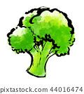 붓 그리기 야채 음식 브로콜리 44016474