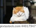 졸린 고양이 44017947