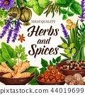 Seasoning, spices, herbs and condiments vector 44019699