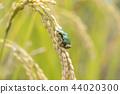 벼와 청개구리 44020300
