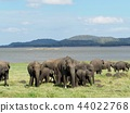 群大象@斯里蘭卡野生動物園 44022768
