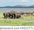 群大象@斯里蘭卡野生動物園 44022771