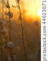 Sunset with snail shells 44023071