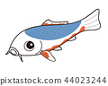 fish, fishes, colored 44023244