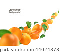 apricot, background, fruit 44024878