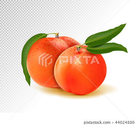 Two peaches with leaves isolated on transparent background. Realistic vector 3d illustration 44024880