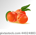 Peaches with leaves isolated on transparent background. Realistic vector 3d illustration 44024883