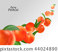 Flying peach. Realistic 3D illustration. Vector peaches on transparent background. 44024890