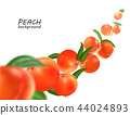 Flying peach. Realistic 3D Vector peaches background. 44024893