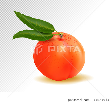 Realistic Ripe Peach with Leaf on White Background, Isolated Sweet Fruit, 3D Hand Drawn Vector 44024913