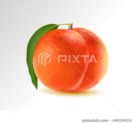 Realistic Ripe Peach with Leaf on White Background, Isolated Sweet Fruit, 3D Hand Drawn Vector 44024914