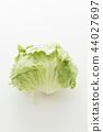 양배추, 야채, 채소 44027697