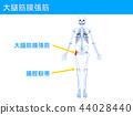 พังผืดเส้นเลือดขยายกล้ามเนื้อเอ็นเอ็น 2 - 44028440