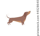 Purebred brown dachshund dog vector Illustration on a white background 44028640