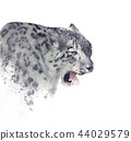 Snow leopard portrait watercolor 44029579