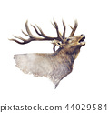Bull Elk watercolor 44029584
