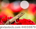 一隻蜥蜴 44030879