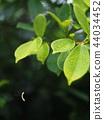 애벌레, 녹색, 초록색 44034452